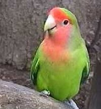Investigations in pet birds (Agapornis spp.) fed different vitamin K3 contents in the diet