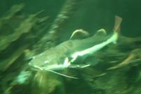 Presentatie van voedsel bij vissen
