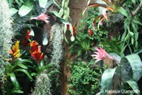 Huisvesting van de pijlgifkikker