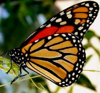 "Vlinderparadijs ""Papiliorama"""
