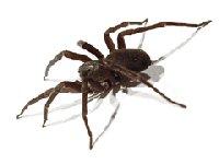 Huisvesting en Verzorging Spinachtigen
