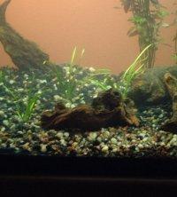 Een gezonde aquariumbodem