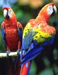 Gezonde papegaaien