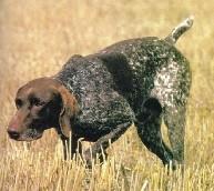 Huisvesting en Verzorging van de Hond