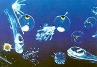 Lipid storage in marine zooplankton