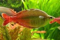 Voeding Regenboogvissen