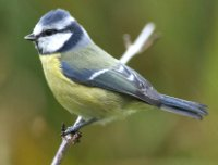 Recent changes in body weight and wing length among passerine birds