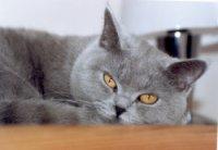 Huisvesting en Verzorging van de Kat